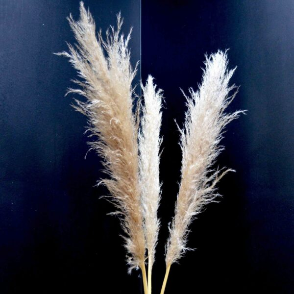 Fleur de pampas